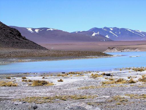 For wild animals Atacama Desert or Isla Magdalena